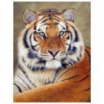 Tiger Fissando