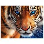 Minaccia della Tigre
