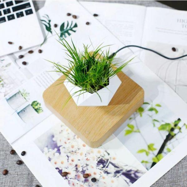 Vaso galleggiante magnetico per pianta bonsai - vista dall'alto