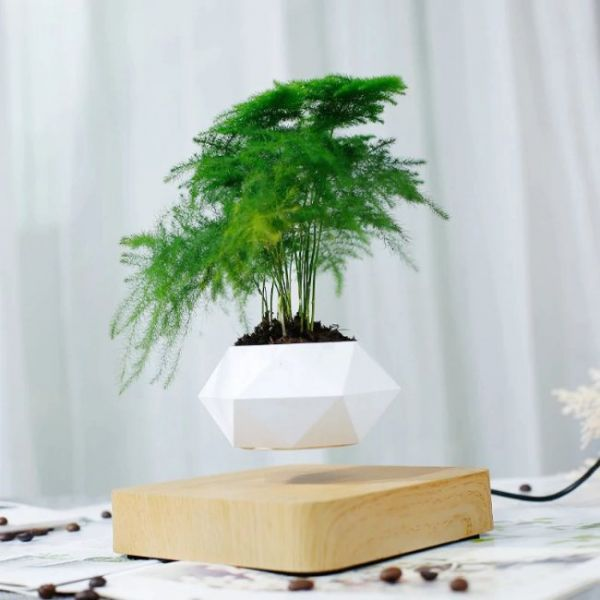 Vaso galleggiante magnetico per pianta bonsai che è totalmente nell'aria