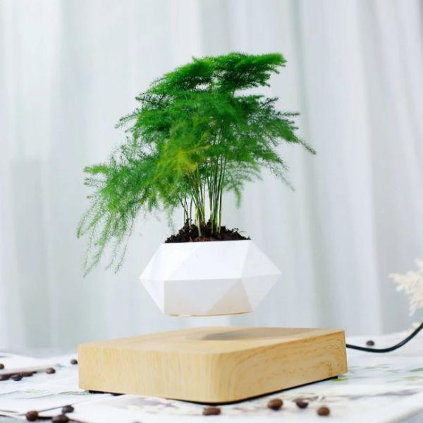 Vaso galleggiante magnetico per alberi bonsai
